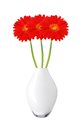 Beautiful red gerbera daisy flowers in vase isolated on white background Stock Photography