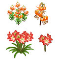 Beautiful red and orange lilies. Vector flowers