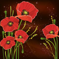 Beautiful red poppies background Stock Images