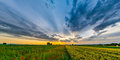 Beautiful red poppies field sunrise panoramic view, Alsace, Fran Royalty Free Stock Photo