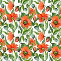 Beautiful red poppy flowers with green leaves on white background. Seamless summer floral pattern. Watercolor painting. Royalty Free Stock Photo