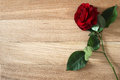 Beautiful red rose flower with on rustic wood background. Royalty Free Stock Photo