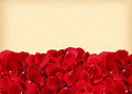 Beautiful red rose petals on old yellow paper Royalty Free Stock Photo