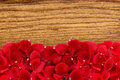 Beautiful red rose petals over wood texture close-up Royalty Free Stock Photo