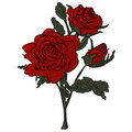 Beautiful red rose  on white. Royalty Free Stock Photo