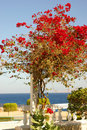 A beautiful red tree on a resort background Royalty Free Stock Photography