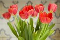 Beautiful red tulips close up bouquet of Royalty Free Stock Photo
