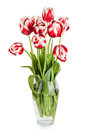 Beautiful red tulips flowers bouquet in vase Royalty Free Stock Image