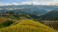 Beautiful Rice Terraces, South East Asia. Royalty Free Stock Photo