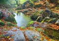 Beautiful river in autumn forest Stock Images