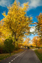 Beautiful road in the autumn park Royalty Free Stock Photo