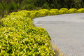 Beautiful roadside shrubs. Royalty Free Stock Photo