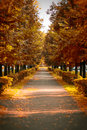 Beautiful romantic alley in the city park with colorful trees. n Royalty Free Stock Photo