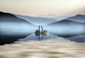 Beautiful romantic image of swans on misty lake with mountains i in background landscape Royalty Free Stock Photo