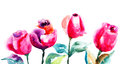 Beautiful rose flower watercolor illustration Stock Images