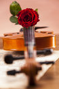 Beautiful roses and violin! Stock Image
