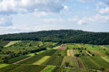 Beautiful rows of viticulture in austria Stock Images