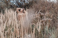 Beautiful sad cute attractive woman in a beige sweater wide in a field of dry grass in autumn cold overcast day, photo of beige Royalty Free Stock Photo