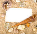 Beautiful sand with exotic shell Royalty Free Stock Image
