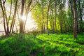 Beautiful scene in the forest spring landscape with sun Stock Photography