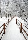 Beautiful scenery with a snow-covered path with wooden fence in the forest among the trees after a snowfall on a cloudy winter day Royalty Free Stock Photo