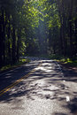 Beautiful scenic country road curves in forest Stock Images