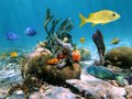 Beautiful sea life in the caribbean sea with corals colorful sea sponges and tropical fish Stock Images