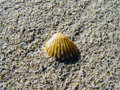 Beautiful sea shell on golden sand closeup of Stock Photo
