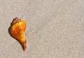 Beautiful sea shell on sand background Stock Photos