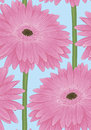 Beautiful seamless background with pink gerbera flower with a stem hand drawn effect of drawing in watercolor Stock Photography