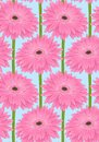 Beautiful seamless background with pink gerbera flower with a stem.