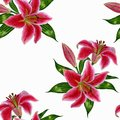 Beautiful seamless pattern with pink lily flowers on a white background.