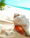 Beautiful Seashell Stock Photo