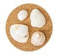 Beautiful seashells on the circular cork base isolated four sea theme Royalty Free Stock Image
