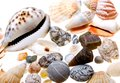 Beautiful seashells isolated on white Royalty Free Stock Images