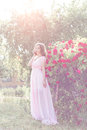 Beautiful sexy girl in a light dress with delicate make up and hair in a flower garden with roses in luchas sunlight at sunset st Royalty Free Stock Images