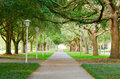 Beautiful shaded sidewalk with a lush green tree canopy and row of lights Royalty Free Stock Photo