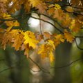 Beautiful shallow depth of field macro image of colorful autumn Royalty Free Stock Photo