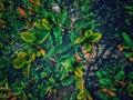A beautiful shiney tree Royalty Free Stock Photo