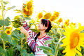 Beautiful smiling girl in embrodery holding a sunflower on a fie Royalty Free Stock Photo