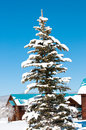Beautiful snow covered pine tree brigh blue sky background Stock Photo