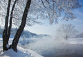 Beautiful snow-covered tree near the river , which soars Royalty Free Stock Photo