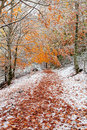 Beautiful snowy forest Stock Photos