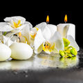 Beautiful spa composition of blooming white orchid flower, phala Royalty Free Stock Photo
