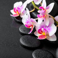 Beautiful spa composition of orchid phalaenopsis on black zen st Royalty Free Stock Photo