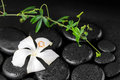 Beautiful spa concept of blooming delicate white hibiscus, green Royalty Free Stock Photo
