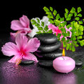 Beautiful spa concept of pink hibiscus flowers, fern branch, can