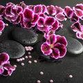 Beautiful spa still life of blooming dark purple geranium flower Royalty Free Stock Photo