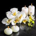 Beautiful spa still life of blooming white orchid flower, phalae Royalty Free Stock Photo