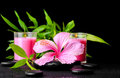 Beautiful spa still life of pink hibiscus flower, twig bamboo an Royalty Free Stock Photo